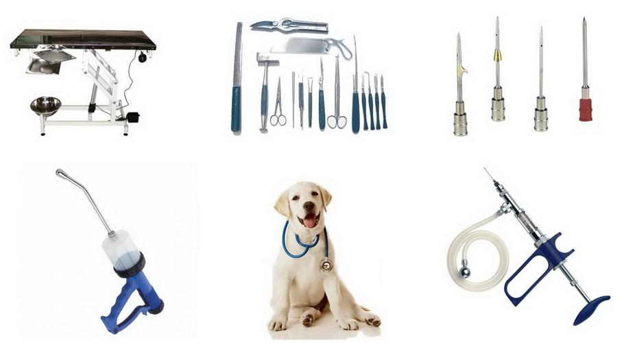 Ветеринария картинка